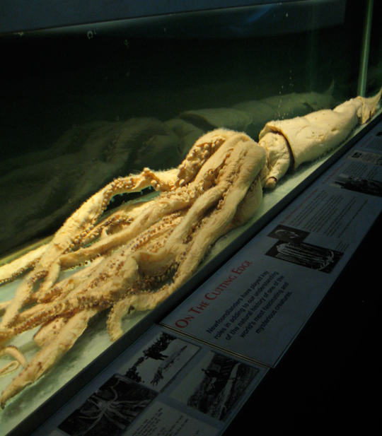 The Giant Squid