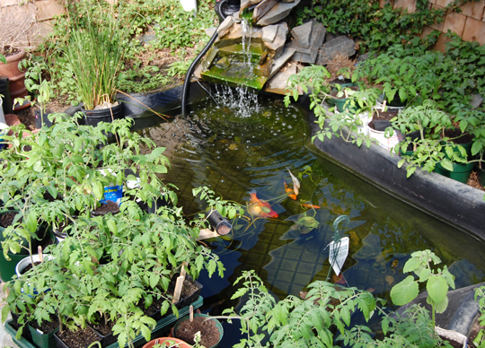 Diy fish pond the scope archive for Diy fish pond
