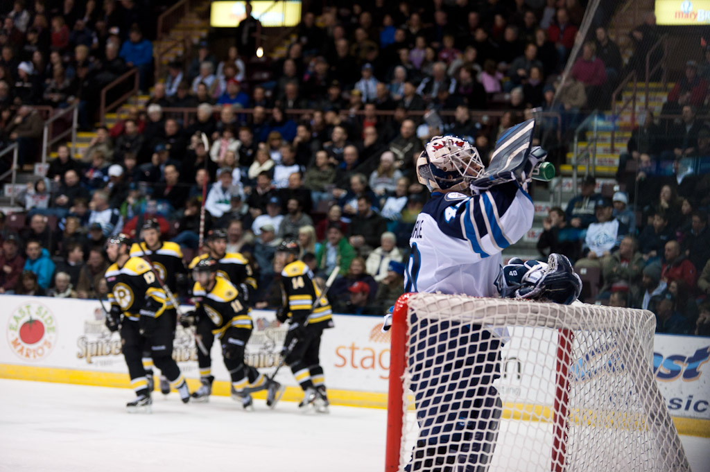 Baby Bruins too Big for IceCaps